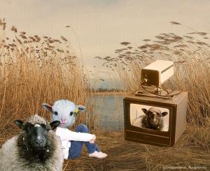 la ovejita01